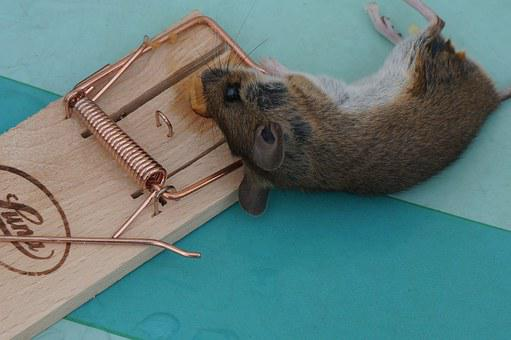 Animal, Mouse, Nager, Case, Mousetrap, Mausetod