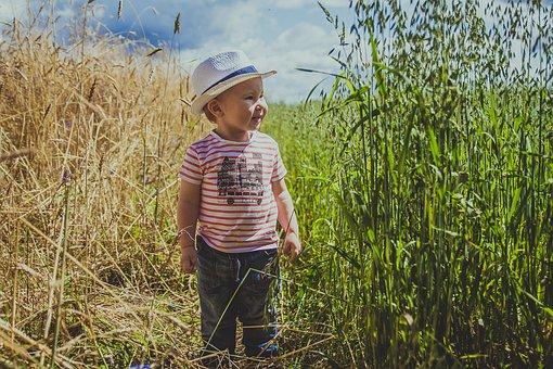 Field, Grass, Nature, Summer, Green Grass, Meadow, Sky