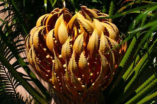 Blossom, Flower, Orange, Large, Succulent, Plant
