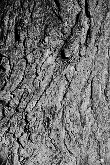 Abstract, Background, Bark, Detail, Material, Natural