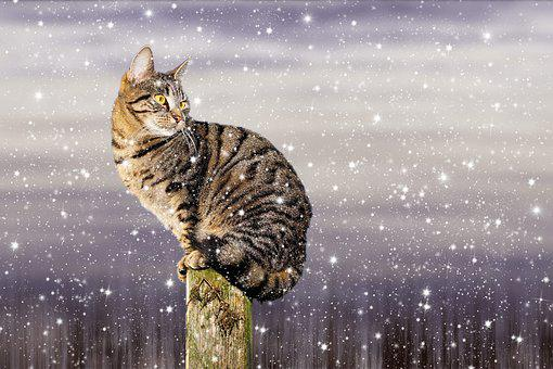 Cat, Snow, Winter, Domestic Cat, Frost, Adidas, Sweet