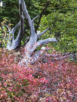 Forest, Dry Tree, Shrubs, Red, Nature, Autumn, Fall