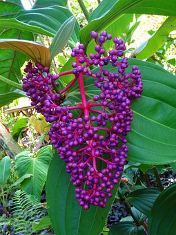 Berries, Wild, Purple, Plant, Bush, Botanical, Garden