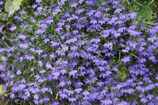 Purple Flowers, Little Flower, Flowers, Flower Grass