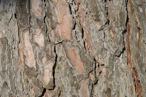 Bark, Tree, Trunk, Wood, Brown, Weathered, Surface