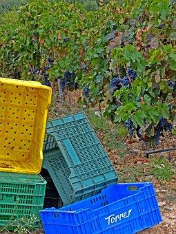 Vintage, Vineyard, Boxes, Vine, October, Wine