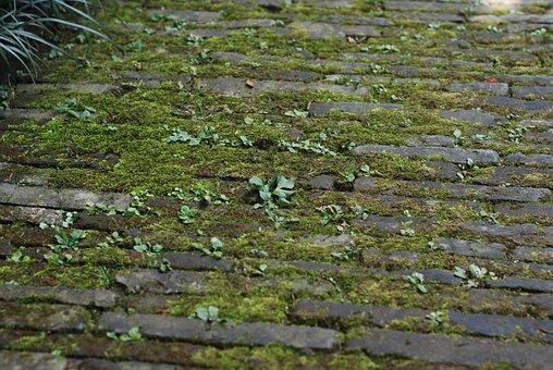 Ground, Moss, Brick