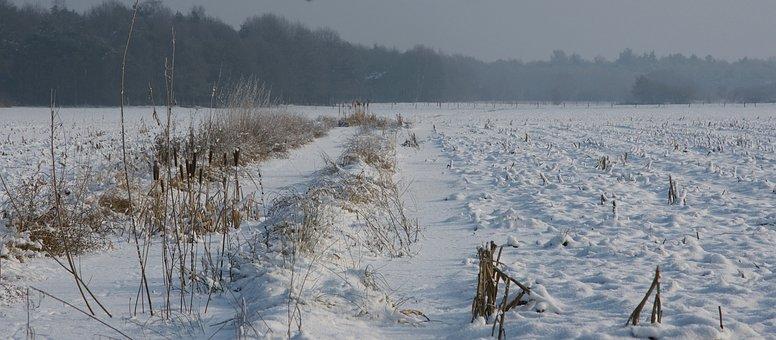Snow, Winter Landscape, Helvoirt