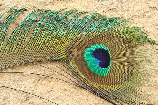 Peacock, Feather, Colorful, Blue, Green, Iridiscent
