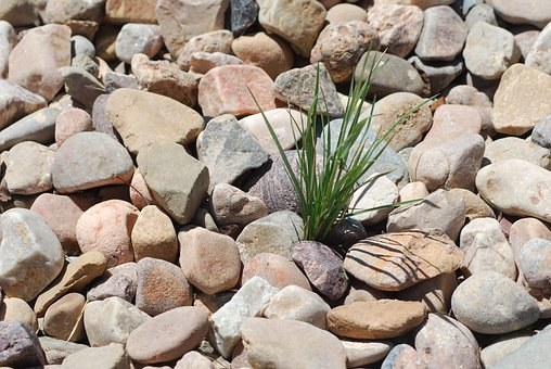 Pebbles, Rocks, Weed, Stones