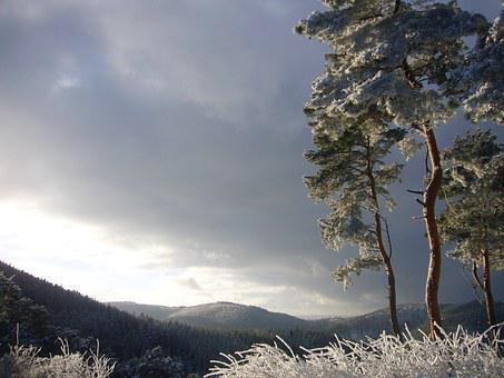 Pine, View, Landscape, Nature, Mogning, Winter, Frost
