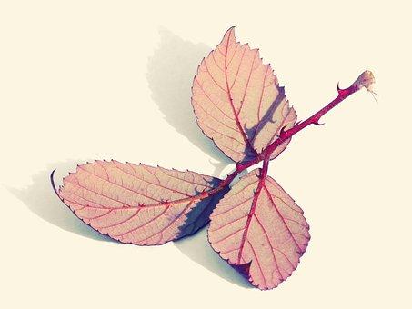 Leaves, Reverse, Zarza, Blackberry, Red, Autumn