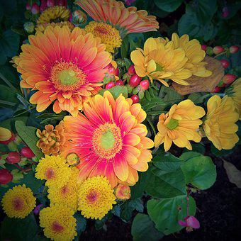 Autumn Bouquet, Gerbera, Autumn Chrysanthemums