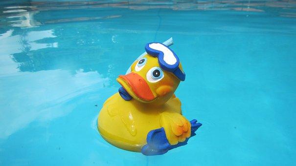 Duck, Quitscheente, Wet, Swim, Color, Toys, Bad