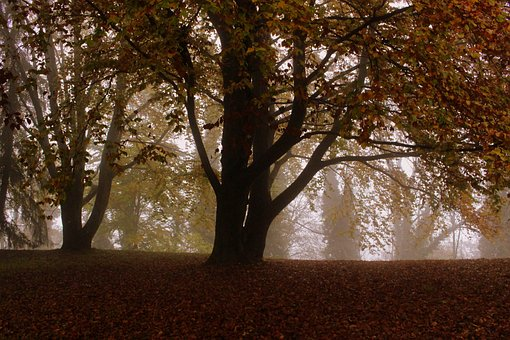 Tree, Beech, Autumn, Leaves, Mood, Nature, Forest