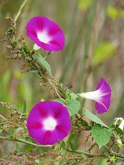 Bluebells, Flowers, Beauty, Wild Flower