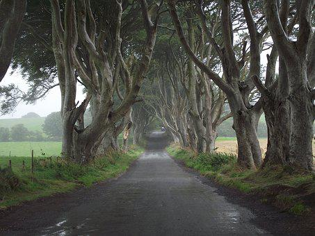Game Of Thrones, Ireland, Trees, Hedges, Nature, Travel
