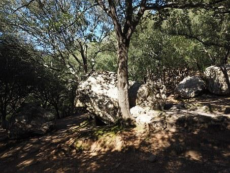 Oak Forest, Rock, Limestones, Karst Landscape, Trees