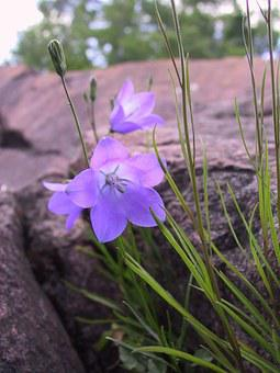 Bluebell, Rocks, Lake Superior, Minnesota, Green