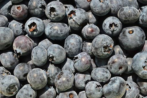 Bilberry American, Berries, Fruit, Bilberry, Nature