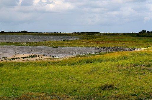 Sea Birds, Coast, Nature, Watt Meadow, Landscape, Mood