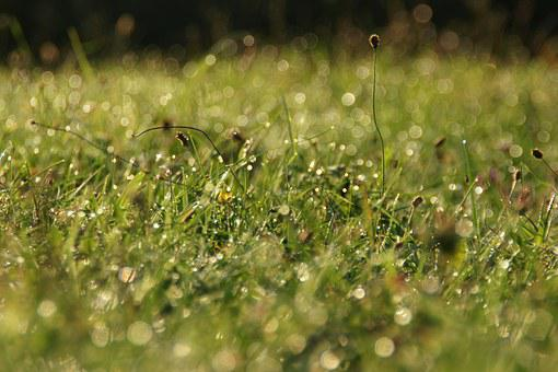 Grass, Waterdrop, Morning, Sunlight, Nature, Water