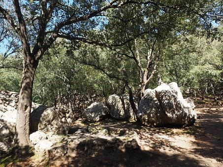 Oak Forest, Trees, Rock, Limestones, Karst Landscape
