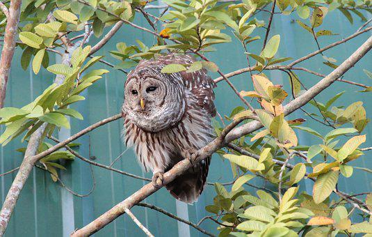 Owl, Spring, Plumage, Forest, Forests, Eagle Owl, Night