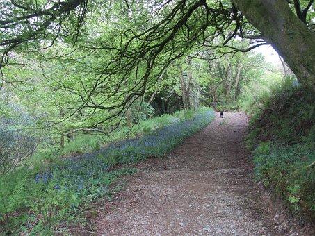 Wales, Walk, Path, Bluebell, Track, Walking, Landscape