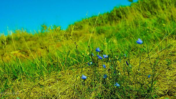 Green, Nature, Flowers, Plant, White, Blue, Bright