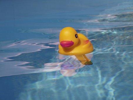 Quietschentchen, Pool, Summer, Swim, Water, Holiday