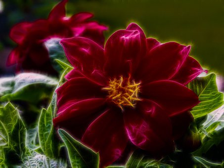 Digital Art, Fragile, Shiny, Fractal, Red, Flower