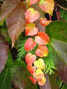 Small Wine Ranke, Living Tree And Vine Leaves, Colorful