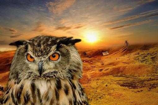 Owl, Landscape, Fantasy, Atmosphere, Sun, Sky, Nature