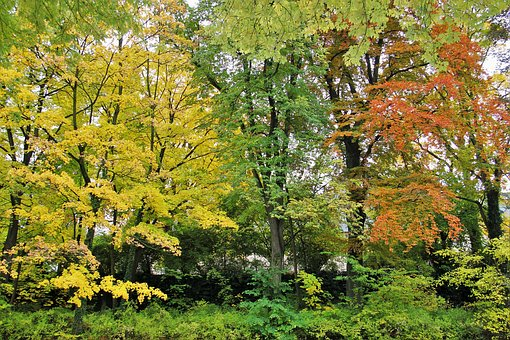 Typical Autumn, Trees, Autumn Coloration, Leaves