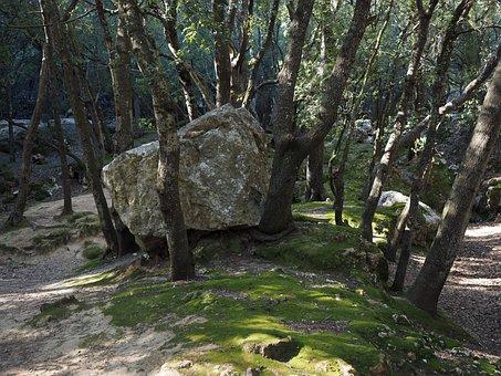 Oak Forest, Rock, Limestone, Trees, Stone Oak