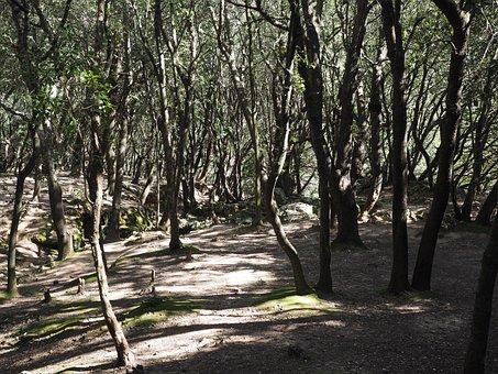 Oak Forest, Trees, Stone Oak, Fairytale, Haunting