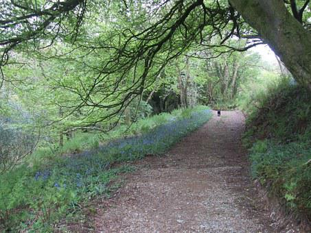 Wales, Walk, Path, Bluebell, Track, Walking, Landscape