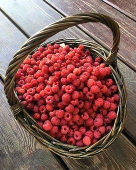 Forest Raspberry, Basket, Wild Raspberries, Raspberry