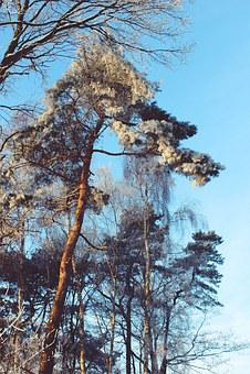 Wintry, Winter, Landscape, Snow, Snowy, Winter Magic