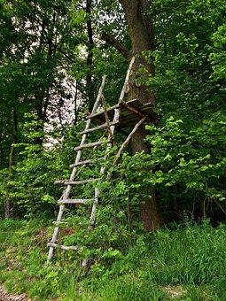Pulpit, Ladder, Forest, Hunting, Wood, Wooden, Levels