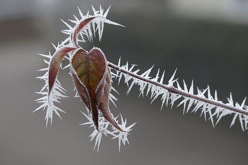 Frost, Frozen, Ice, Winter, Cold, Nature, Leaf, Leaves