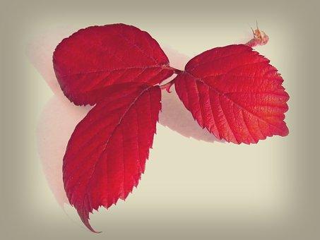 Leaves, Red Leaves, Blackberry, Still Life, Beauty