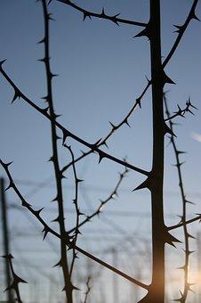 Spur, Thorns, Lichtspiel, Close, Prickly, Plant, Nature