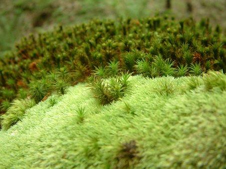 Moss, Green, Plant, Vegetation, Forest Floor, Nature
