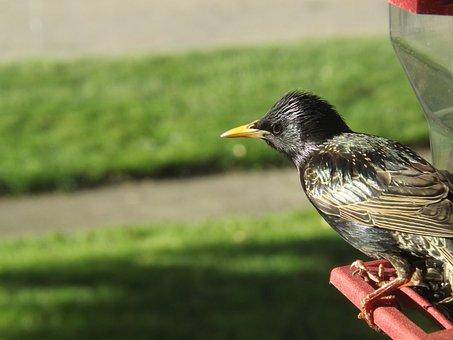 Black Bird, Tree, Organic, Agriculture, Outdoors