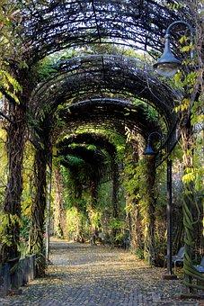 Tunnel, Plant Tunnel, Away, Plant, Promenade, Garden