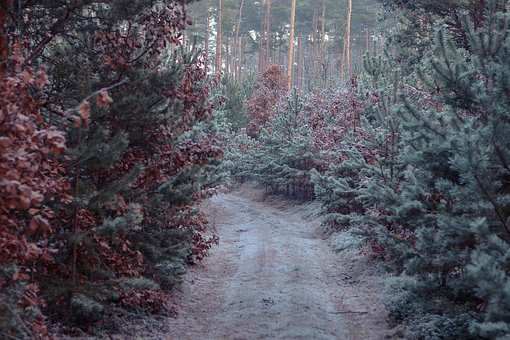 Winter, Forest, Away, Frost, Ice, Cold, Tree, Fog