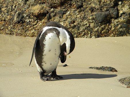 Pingivn, Bird, Beach