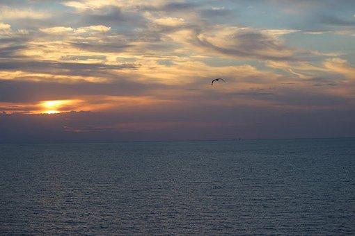 Sunset, Bird, Ocean, Clouds, Sky, Colorful, Birds, Sun